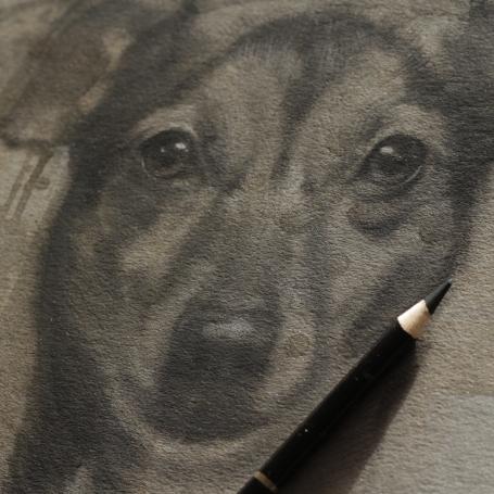 2016-schets hond-petportrait-jennifer koning- miss a in uitvoering