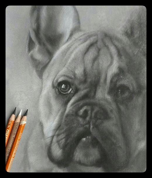 franse bulldog portret houtskool