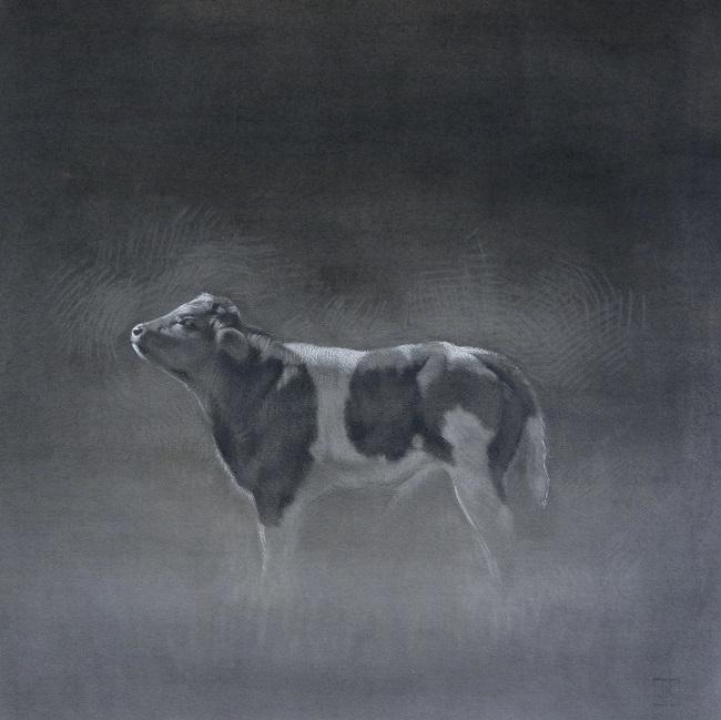 belgisch blauw kalfje Teun - houtskool koeienportret- jennifer koning