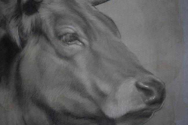 2016-koeien-houtskool portret-jenniferkoning-marie detail