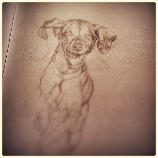 schetsboek - jennifer koning - schets hond