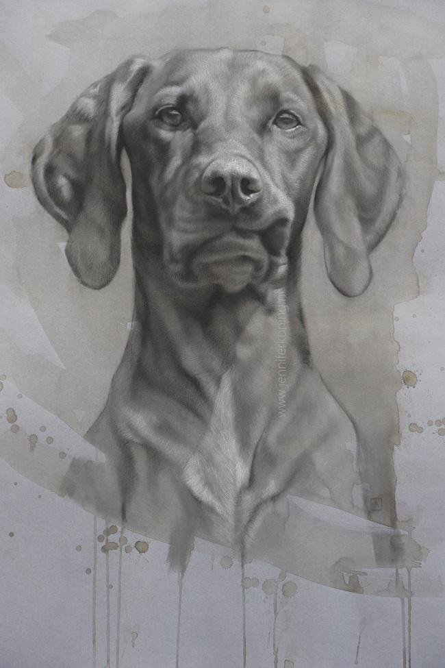 honden portret door jennifer koning - hongaarse vizsla in houtskool - zusse's sticky lip