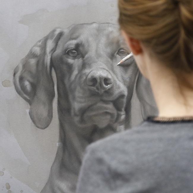 het maken van een honden portret - door jennifer koning - hongaarse vizsla - tekening in uitvoering