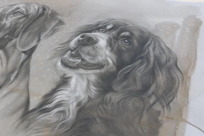 portret tekening hond - engelse springer spaniel - dubbelportret - jennifer koning