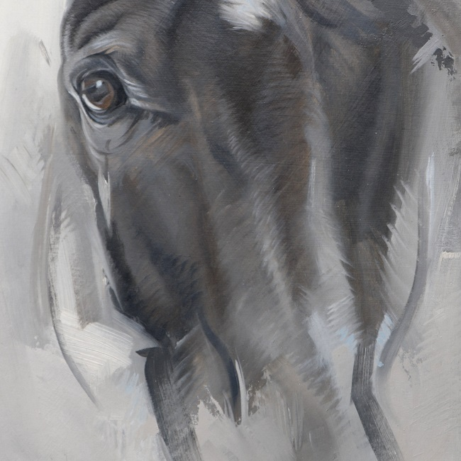 modern schilderij paard - olieverf schets portret paard - jennifer koning - detail