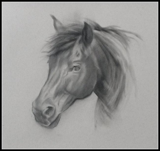 quick sketch horse - charcoal - jennifer koning - snelle schets van paard in houtskool
