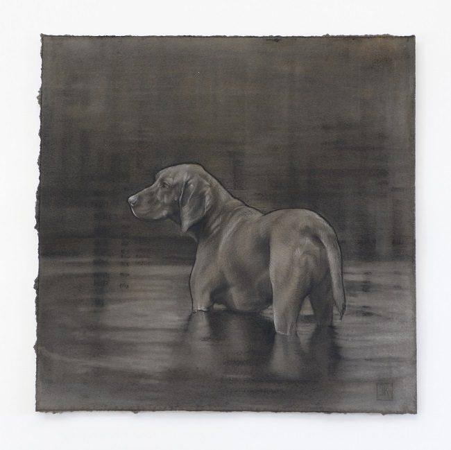 dierenportretten - jacht hond in houtskool - jennifer koning - vizsla in het water