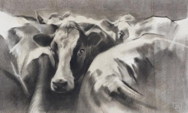 schets melkkoeien - houtskool tekening koe - jennifer koning