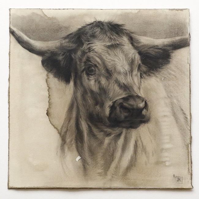 portret engelse longhorn - houtskool -veestukken - ode aan de koe