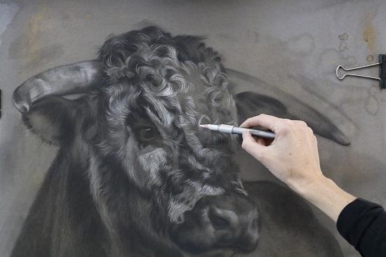 werk in uitvoering - tekening schilderij stier - engelse longhorn - jennifer koning