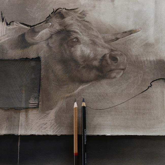 koeienhoofd in houtskool en gemengde technieken - in uitvoering - flash - jennifer koning
