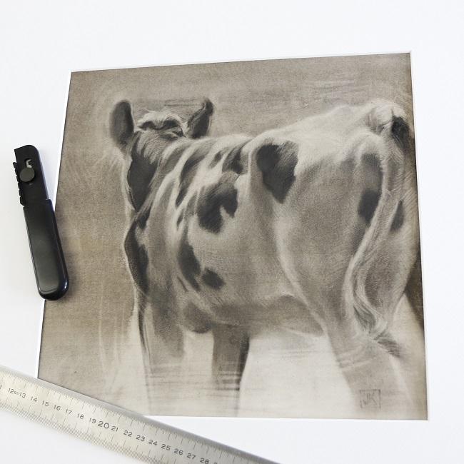zwartbonte koe van achteren - houtskool tekening - passepartout