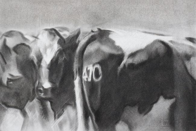 nieuwsgierige koeien II - houtskool en pastel op papier