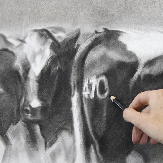 nieuwsgierige koeien in houtskool - tekening in uitvoering