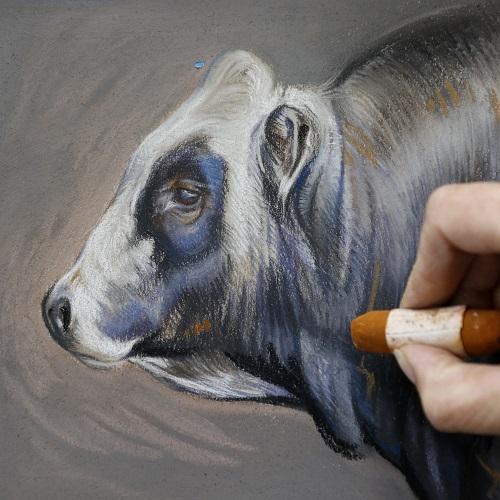piemontese stier in pastel - werk in uitvoering - jennifer koning