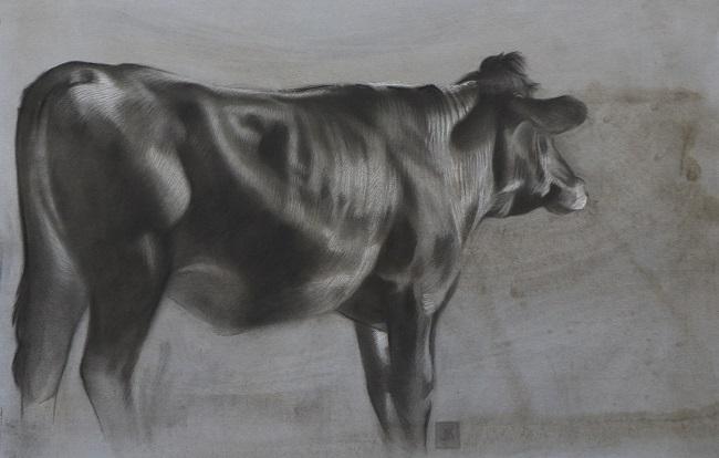 twilight jersey 3 portret koe in houtskool en mixed media door jennifer koning (3)
