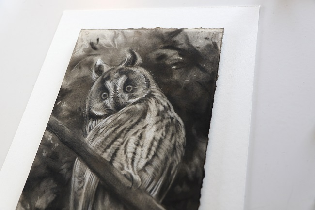 ransuil schilderij in houtskool door jennifer koning (2)