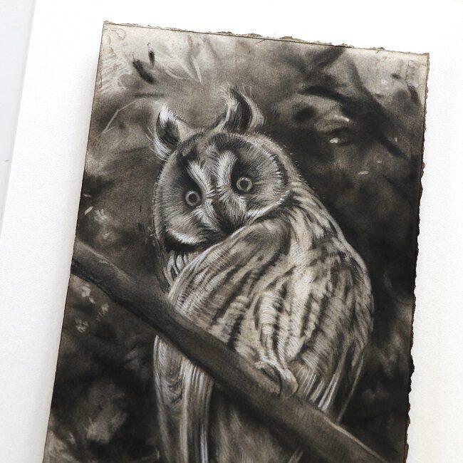 ransuil schilderij in houtskool door jennifer koning (3)