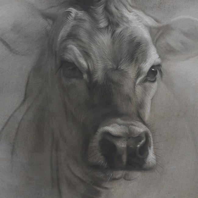 twilight jersey nr 4 portret koe in houtskool en mixed media door jennifer koning (3)